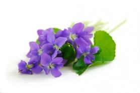 purple-flowers-wallpaper